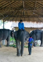 Nathan getting his mahout lesson