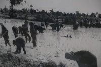 Photo of Khmer Rouge labor camp