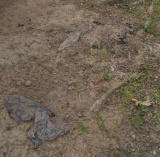 In some spots, you can still see clothing worn by the victims; sometimes it's stuck in the roots of trees.