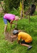 Shellie plants her rambutan tree for the family.