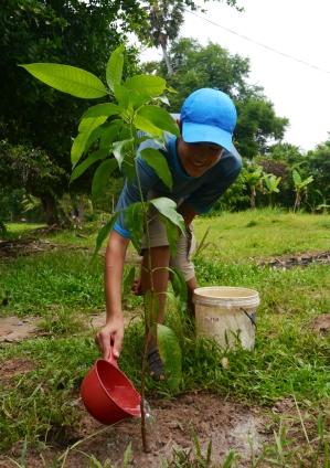 Nathan waters his tree.