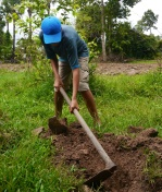 Nathan breaks ground for his mango tree.
