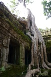 Banyon tree, both beautiful and destructive