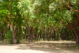 This is the Flooded Forest. In the dry season, the trees sit on land not in the water.