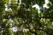 Canopy of the Flooded Forest