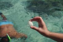 Aidan finds a very fragile sand dollar.