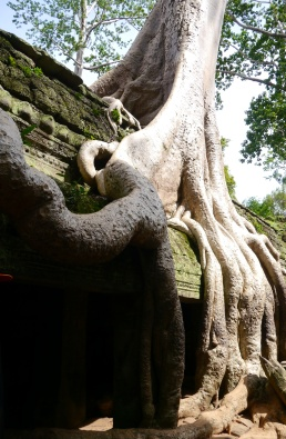 These tree roots remind me of an octopus.