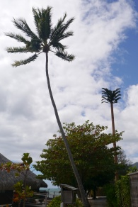 """The """"tree"""" on the right is a cell tower or some kind of antenna."""