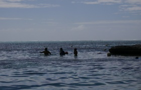 Neerav, Nathan and Aidan spot a black-tip shark!
