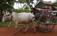 Nathan and Shellie ride in their oxen cart.